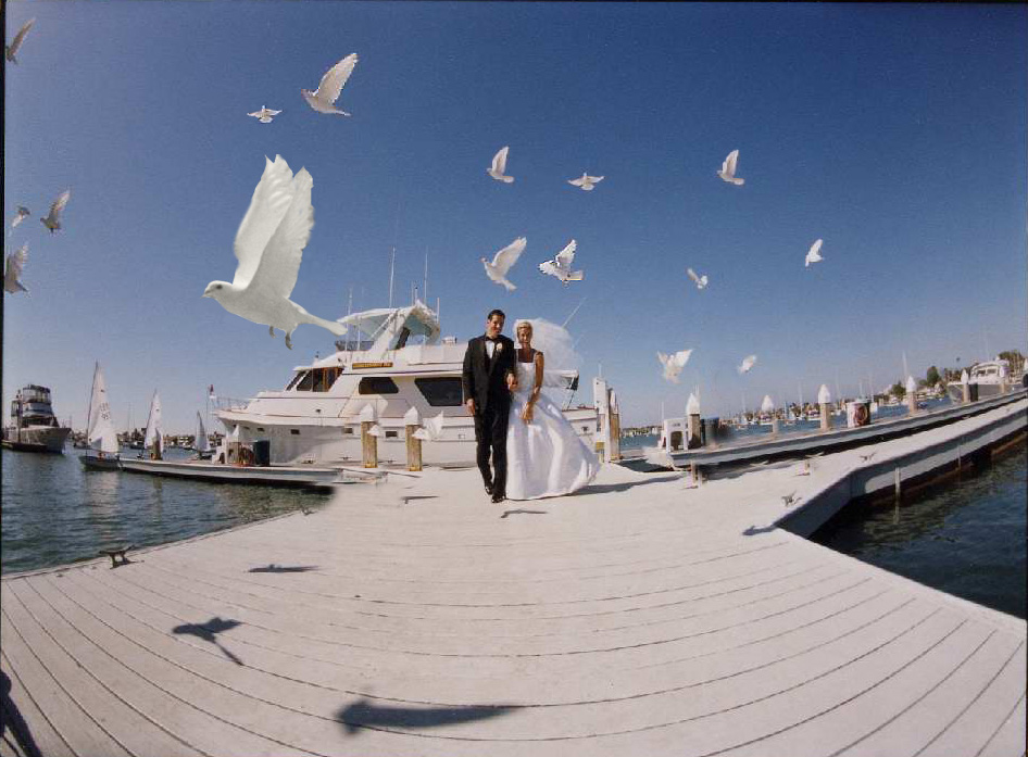 White Dove Release at Balboa Yacht CLub, California. Photo by Joe Photo